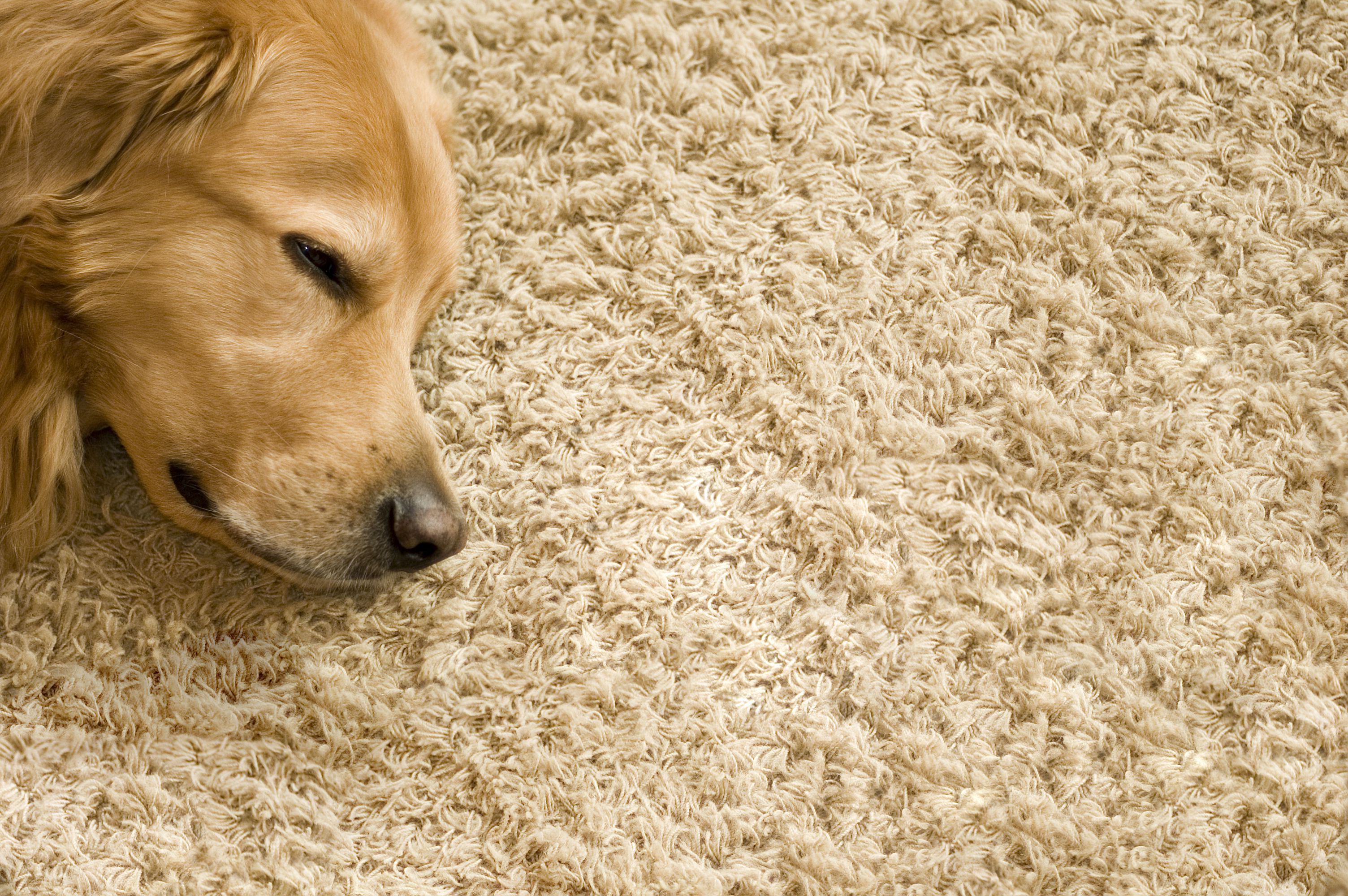 A carpet that you can enjoy for years to come.